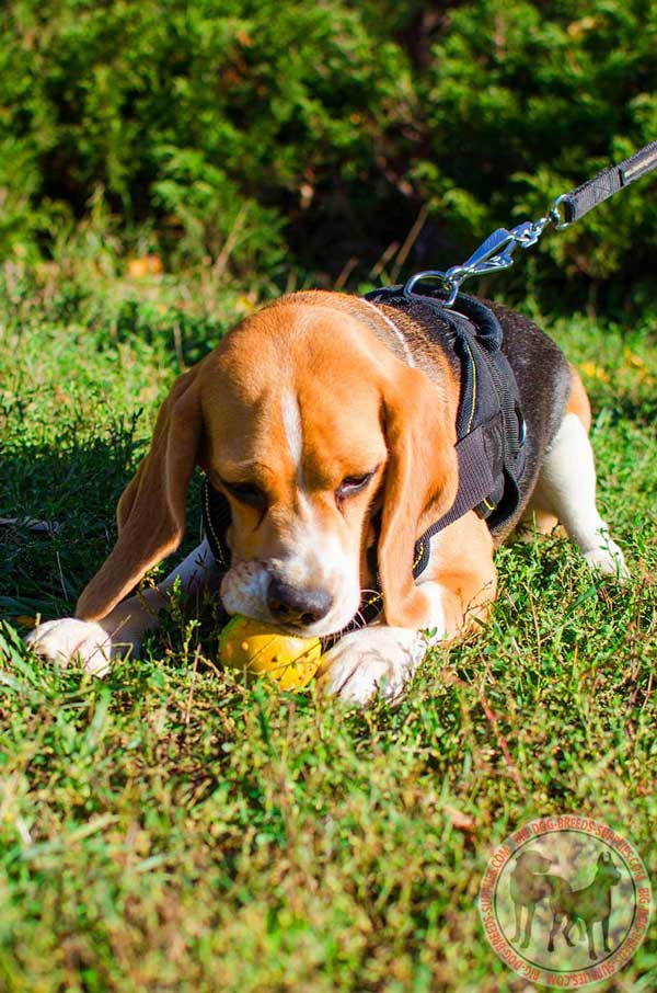 Training Nylon Harness for Beagles