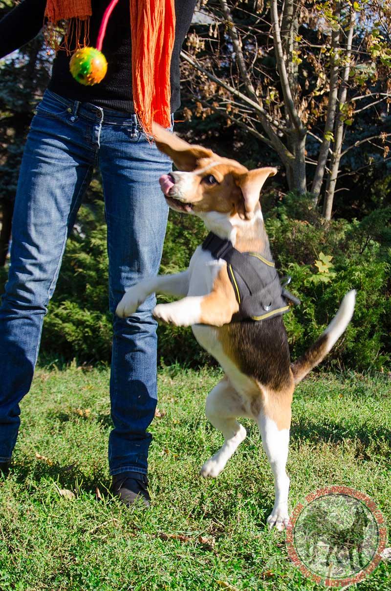 Buy Best Lightweight K9 Nylon Harness Dog Training Walking