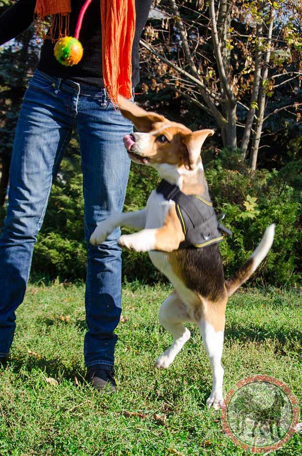 Beagle Nylon Harness for Pulling