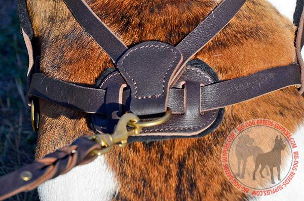 Brass Fittings Stitched to Leather Harness with Nylon Thread