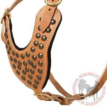 Studded breast plate of leather dog harness