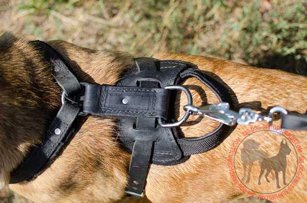 D-Ring for Leash on Leather Harness