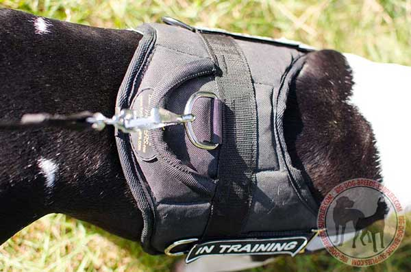 D-Ring on Nylon Harness for Leash
