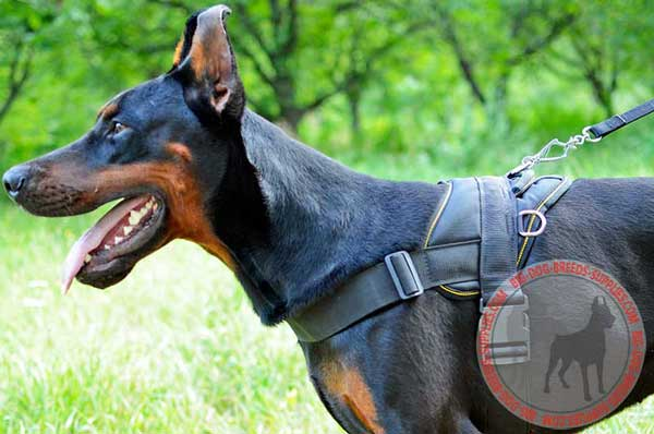 Nylon Doberman Harness with Durable Handle