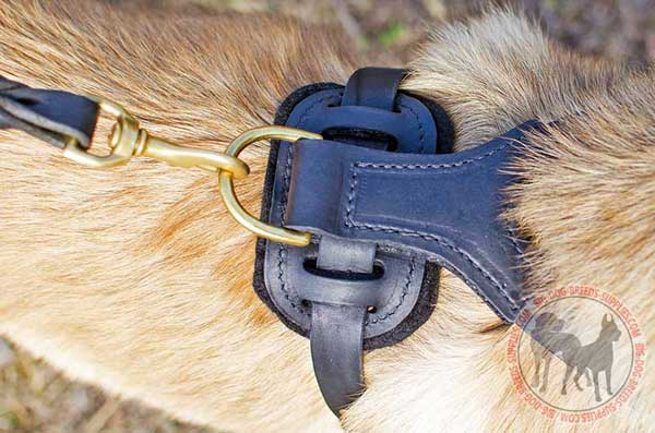 Dog harness with D-ring for a leash