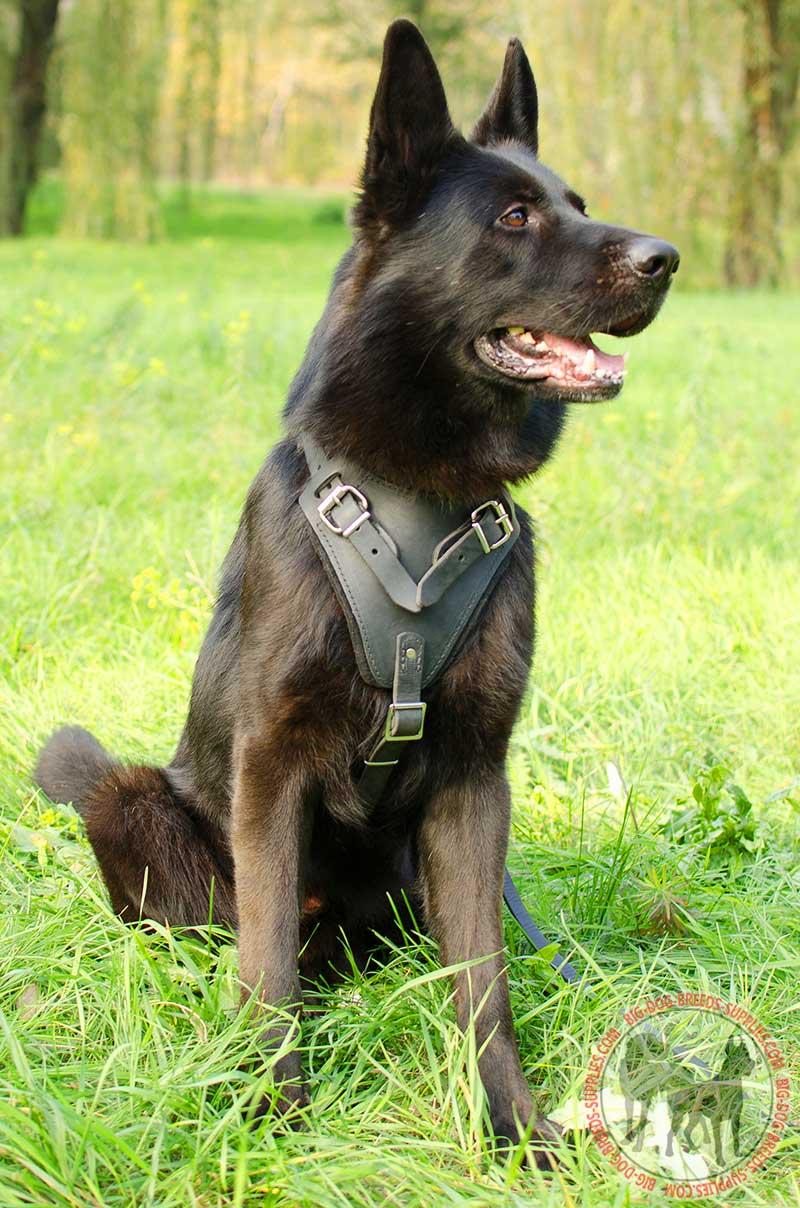 Adjustable Leather Dog Harness German Shepherd Breed
