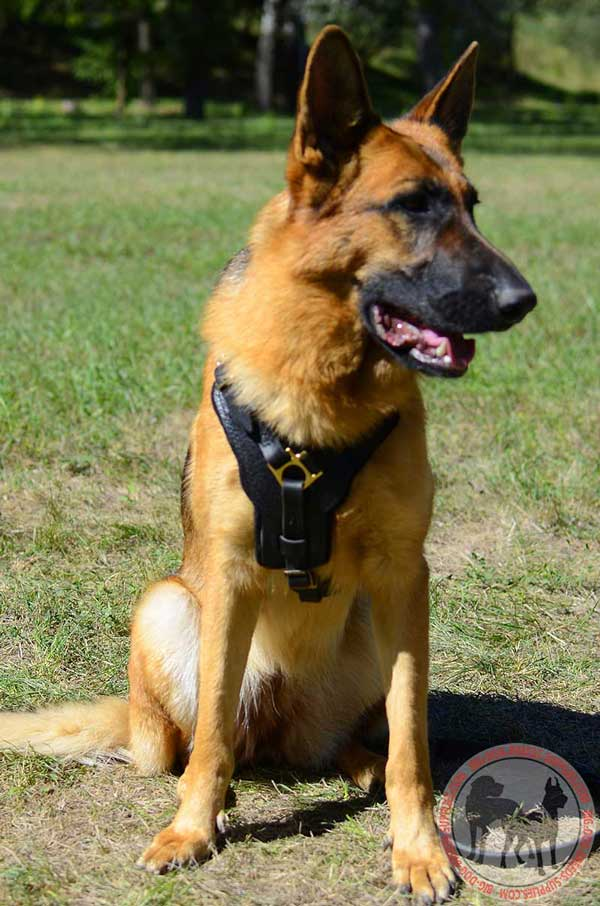 Leather harness for German Shepherd walking and training
