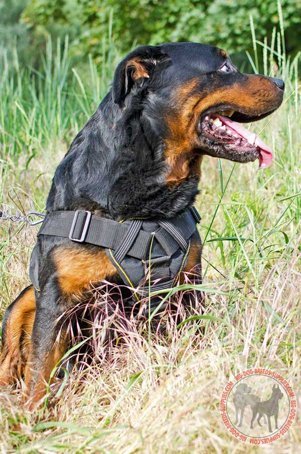 Multifunctional Nylon Rottweiler Harness with Chest Plate for Pulling, Tracking