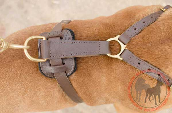 Comfortable Leather Dog Harness