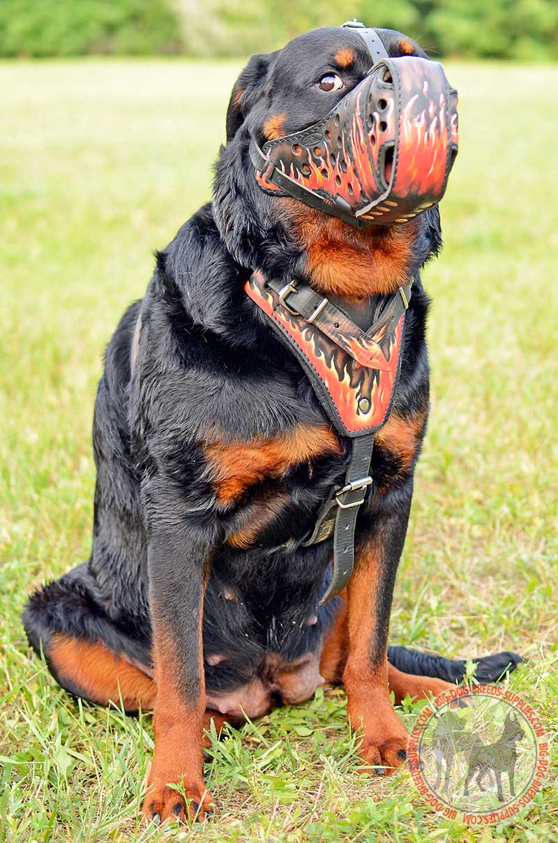 Flames Painted Leather Rottweiler Harness | Attack Work ...