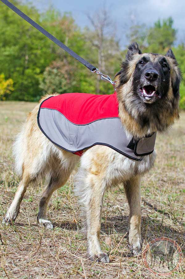 Tervuren dog coat nylon durable water-resistant