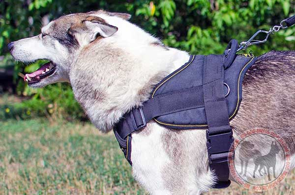 West Siberian Laika nylon harness made of eco-friendly materials