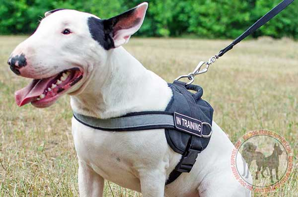 Reflective Bull Terrier Harness for Everyday Usage