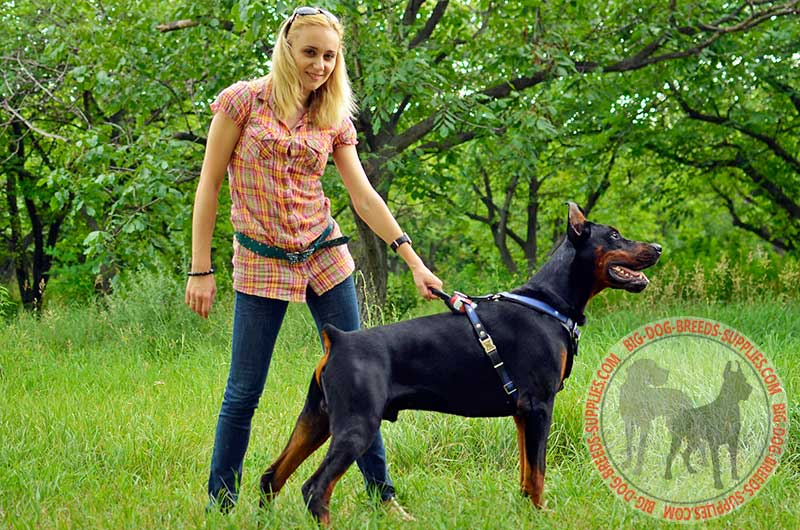American Flag Painted Leather Doberman Harness for Attack ...