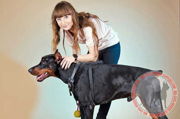Practical Leather Dog Harness for Doberman Walking and Training