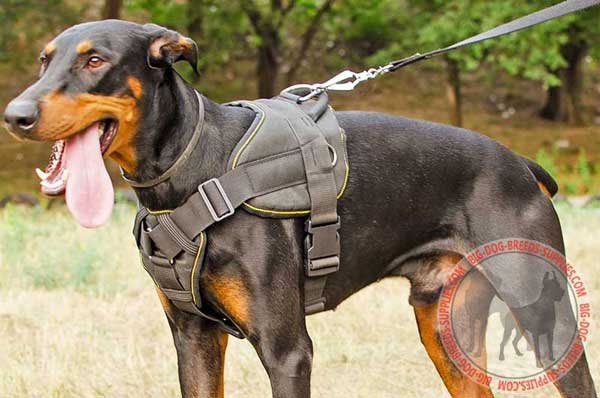Doberman Harness Made of Nylon for Pulling and Tracking