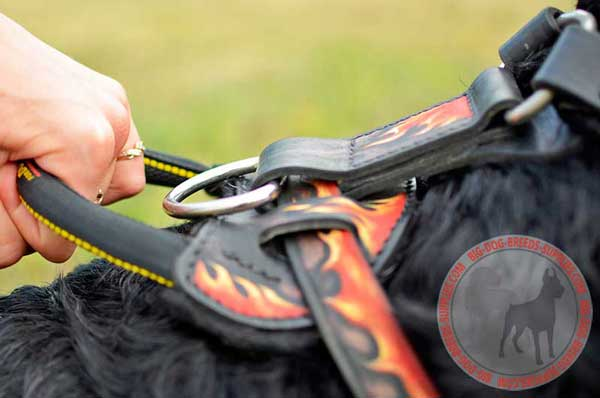 Leather Handle Strong for Being in Due Control of Powerful Canine