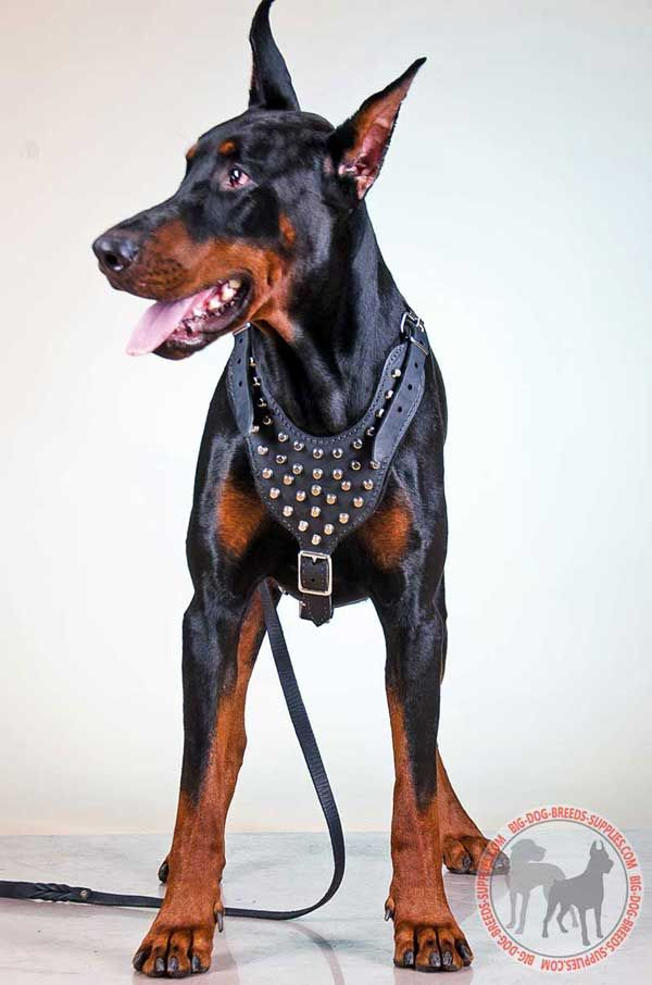 Doberman Leather Dog Harness with Shiny Cones
