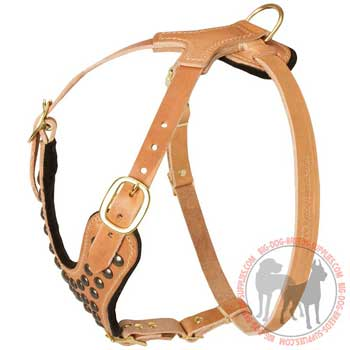 Leather dog harness tan colored for walking