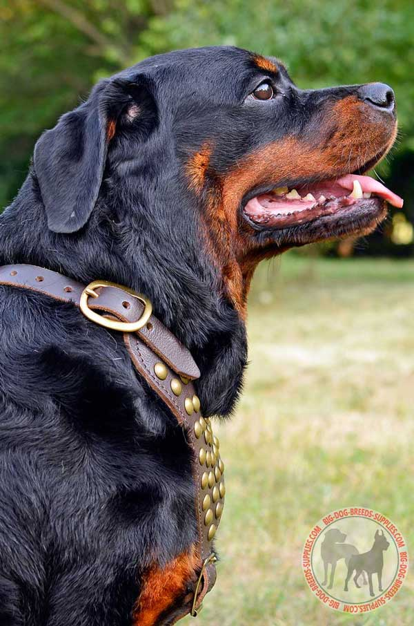 Dog Harness Leather for Rottweiler Walking in Style
