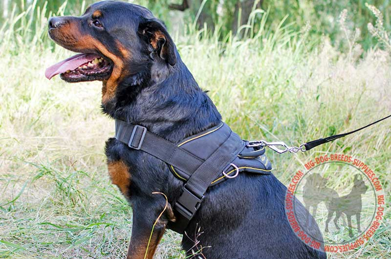 High Quality Nylon Rottweiler Harness Dog Pulling