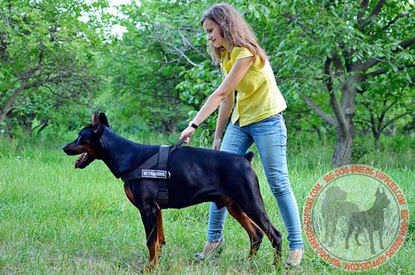 Nylon Harness for  Doberman Identification