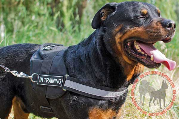 Rottweiler Nylon Harness for All Seasons
