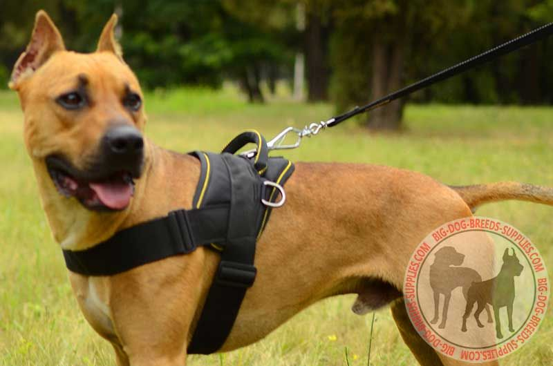 Weatherproof Nylon Pitbull Harness For Weight Pulling Activities P 1139 on canine tracking harness