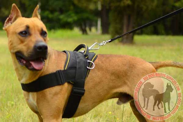 Pitbull Nylon Dog Harness for Pulling and Tracking