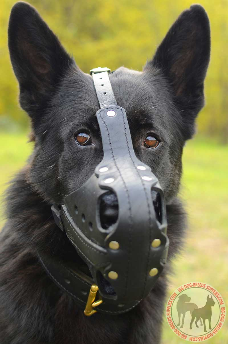 Leather German Shepherd Muzzle Attack Training Work