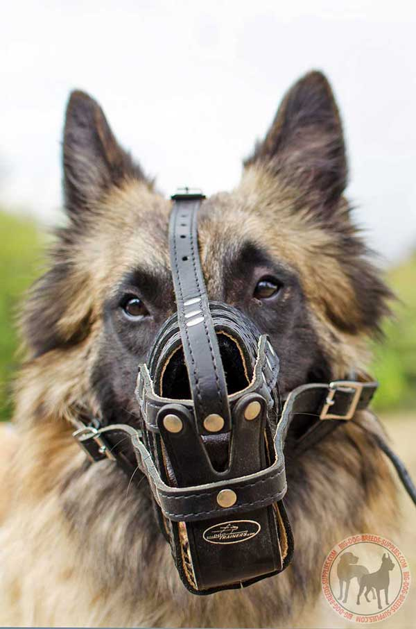 Leather Dog Muzzle for Tervuren Padded for Best Comfort