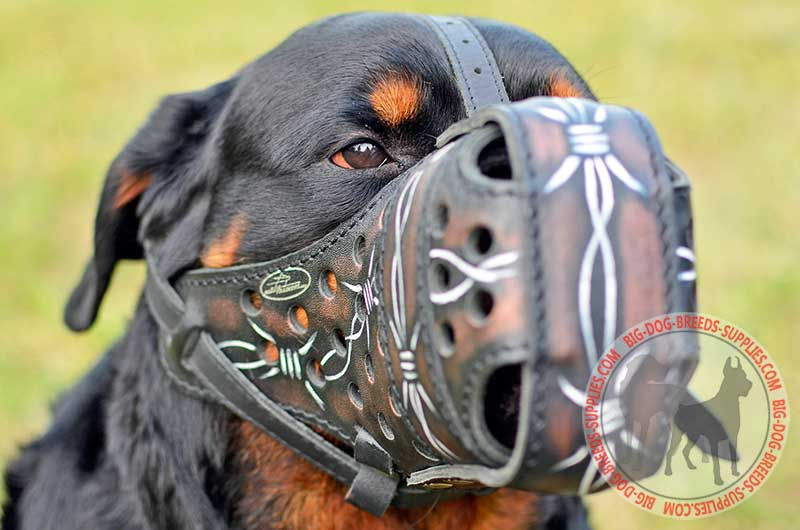 Rottweiler dog attacks