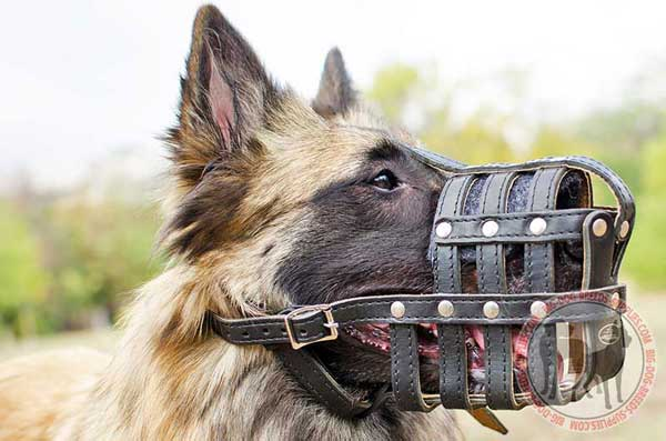 Leather Tervuren Muzzle Cage for Every Day