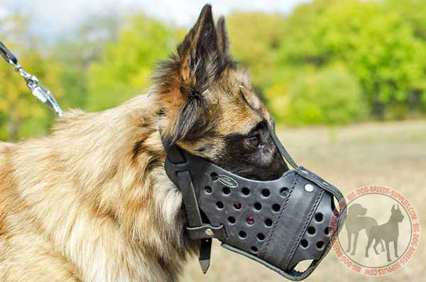 Leather Tervuren Muzzle Betters Comfort During Attack Training