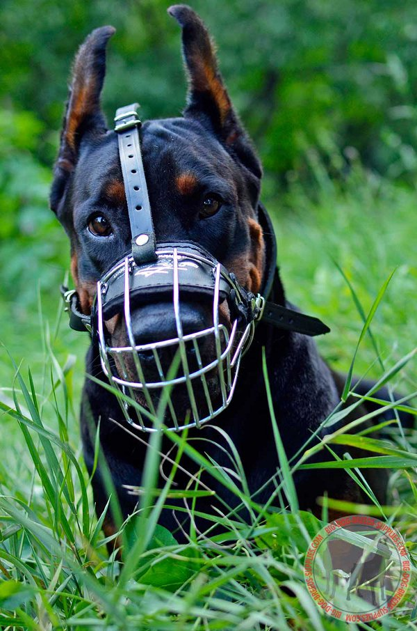 Metal Basket Doberman Muzzle Can Be Worn Regularly