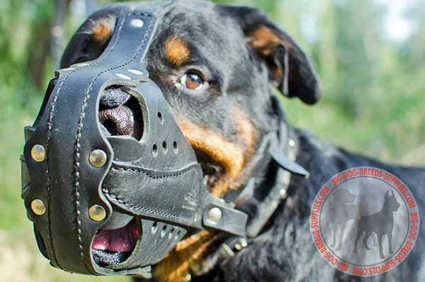 Strong Leather Rottweiler Muzzle for  Attack / Agitation Work