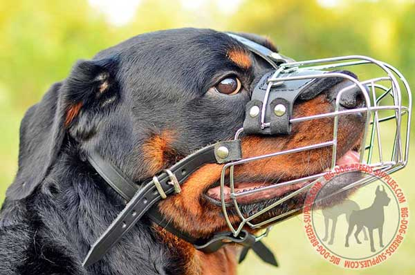 Metal Dog Muzzle Basket for Rottweiler