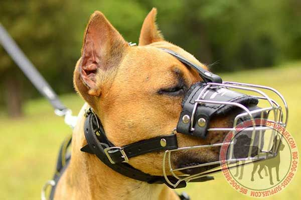 Metal Pit Bull Muzzle Basket for Dog Activities