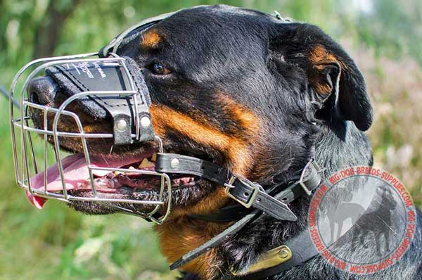 Rottweiler Dog Wire Cage Muzzle Causes no Skin Rubbing