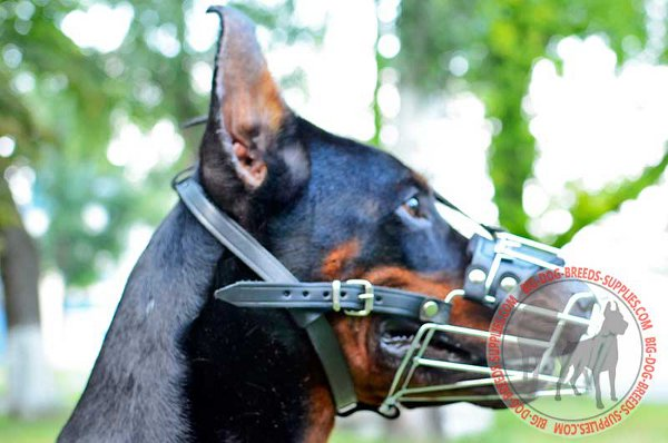 Doberman Wire Dog Muzzle Stays Reliably on the Snout