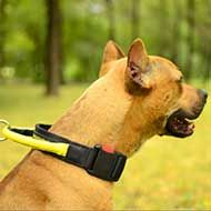 Nylon Pit Bull Collar with Heavy-Duty Handle and Quick Release Button