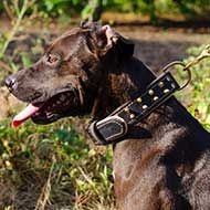 Spiked Padded Leather Pitbull Collar for Walking