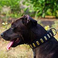 Wide Leather Pitbull Collar with Brass Plates for Walking