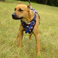 Training Leather Pitbull Harness Painted in American Flag