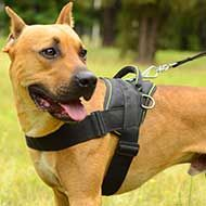Weatherproof Nylon Pitbull Harness for Weight Pulling Activities